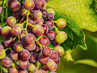 Nutrientes en la Uva