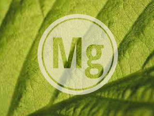 El magnesio y su importancia en el crecimiento vegetal