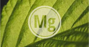 el magnesio en las plantas