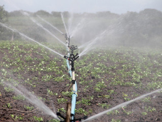 Importancia del agua de riego en la agricultura