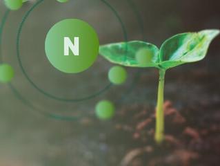 Fertilización nitrogenada: nitrógeno amoniacal, uréico y nitrato