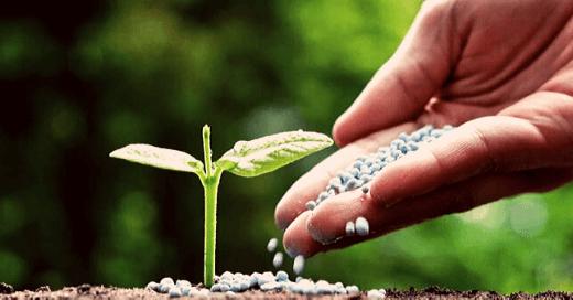 diferencias entre fertilización y nutrición