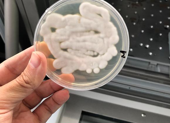 Análisis de Microorganismos