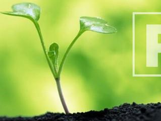 El fósforo y su importancia en el crecimiento vegetal