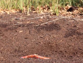 Interpretación del suelo: patrones y cultivos alternativos