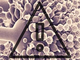 Estrategias de prevención y control de aflatoxinas