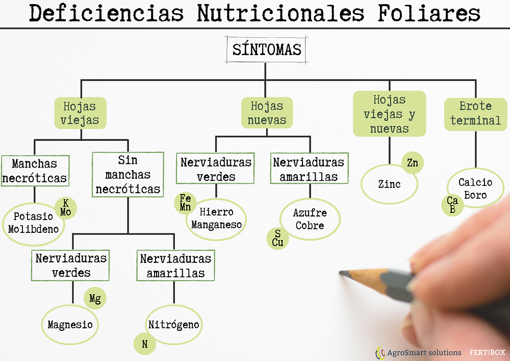 deficiencias nutricionales foliares