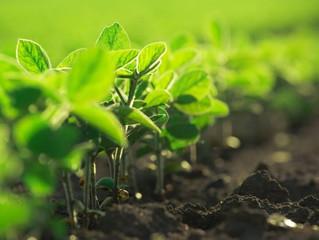 El calcio y su importancia en el crecimiento vegetal
