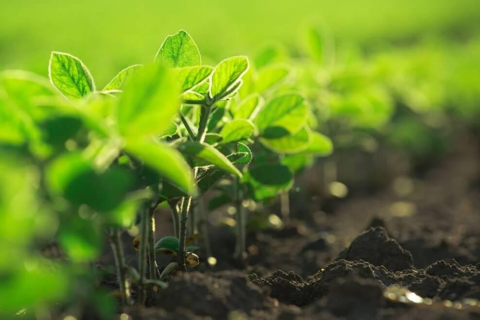el calcio en los cultivos