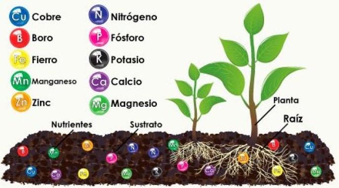 elementos del suelo