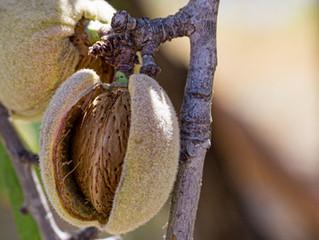 Enfermedades del suelo en el cultivo del almendro