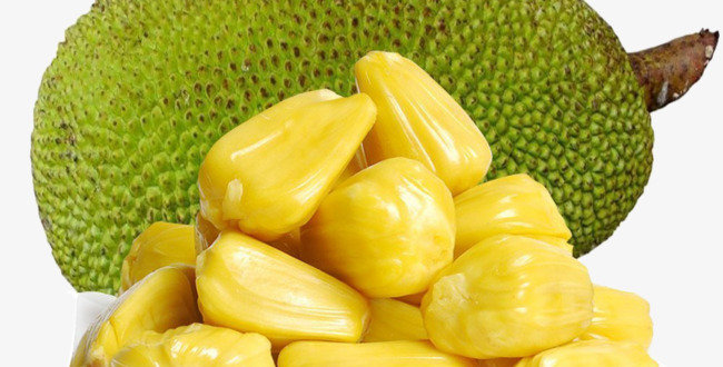 JACKFRUIT WHOLE / JACKFRUIT MEAT(PEELED))