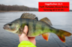 Hegefischen 11.7 - Bild.png