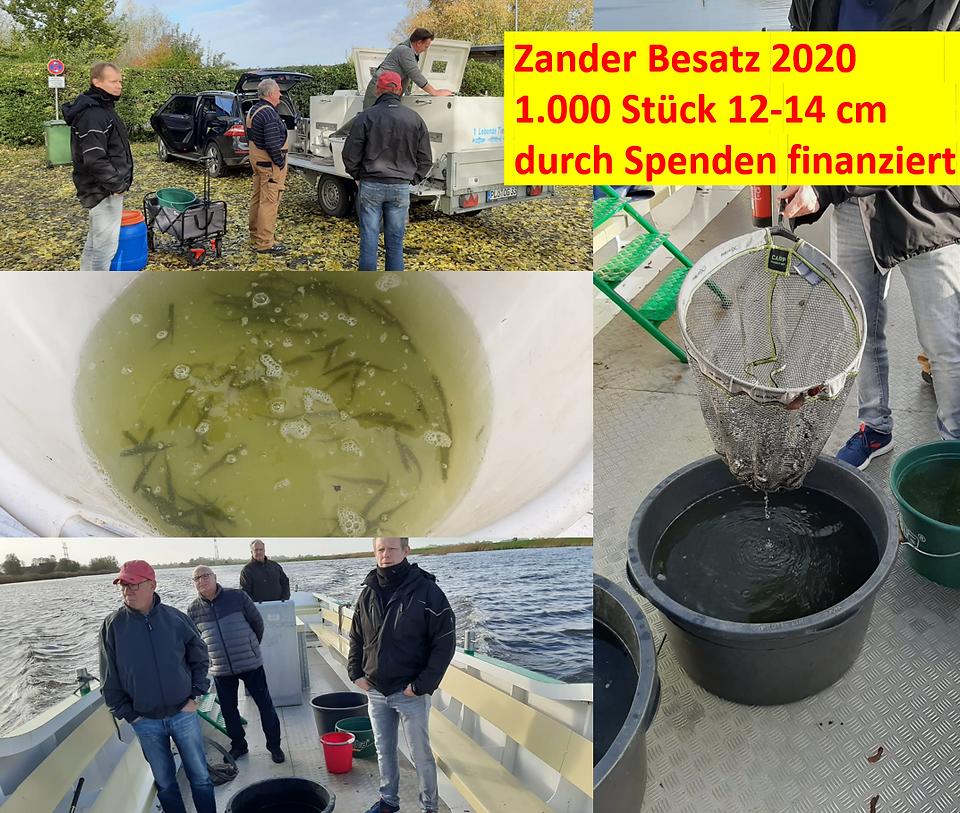 Zander Besatz.png