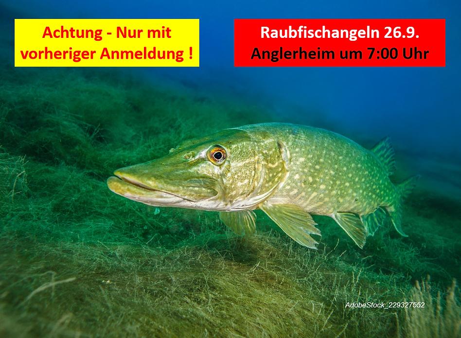 Raubfisch 26.9..png