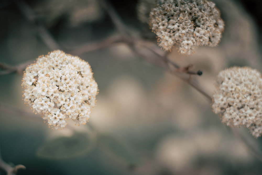 Holly Canon Blog  Lifestyle and Travel Blog Gardening Spring Life The Bearded Bousman Photo Co.