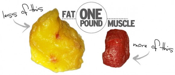 Pound of fat v's pound of muscle