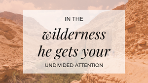 Wilderness And Your Undivided Attention
