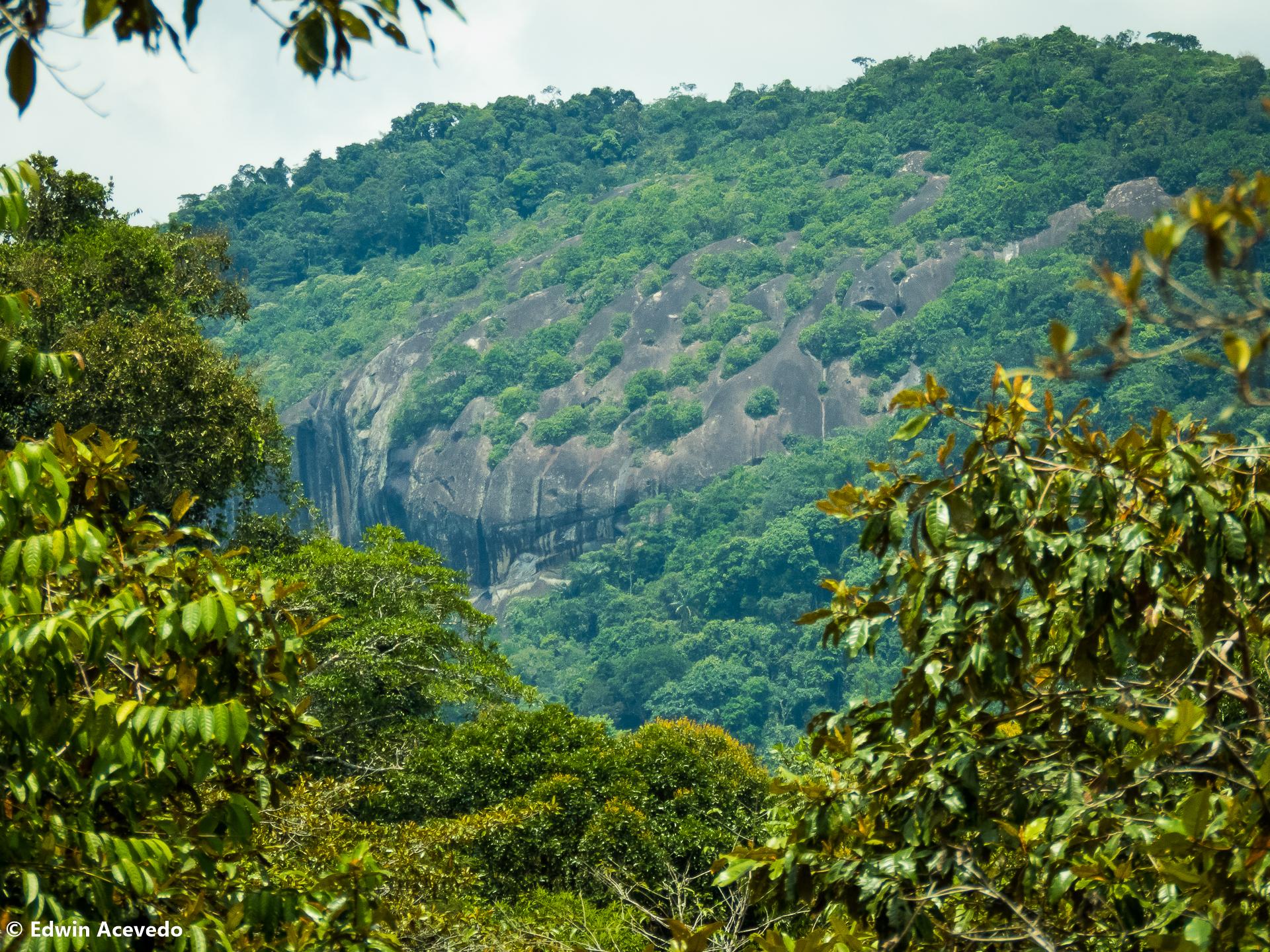 Cerro Guacamayo - Ara Hill