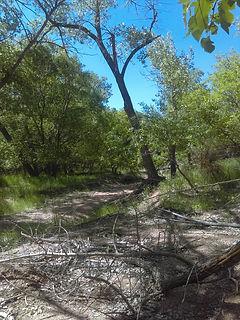woods 3.jpg