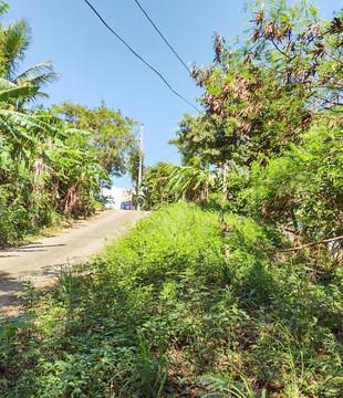 Main Road - 5 Acres