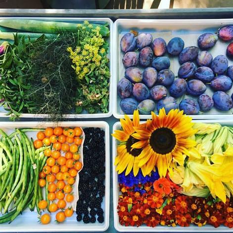 Cordelia Harvest