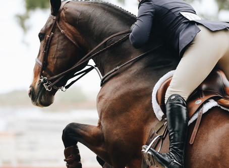 What equipment do I need to start horse riding? (Horse's edition)