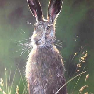 Hares_2.jpg