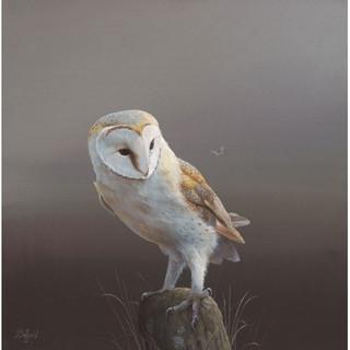 Barn-Owl-1_m.jpg