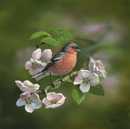 Chaffinch-Apple-Blossom-1_m.jpg