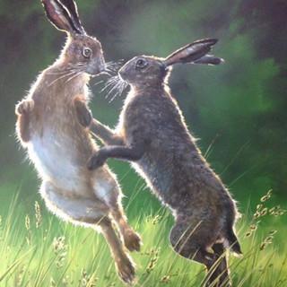 Hares_1.jpg