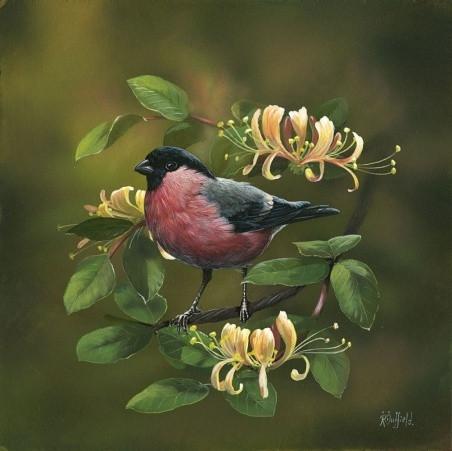 Bullfinch-Honeysuckle-1_m.jpg