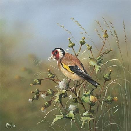 Goldfinch-On-Dandelion-1_m.jpg
