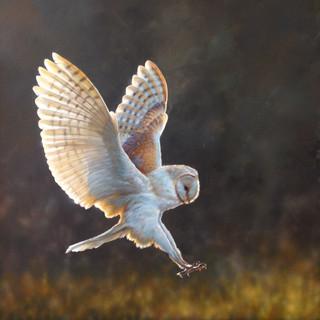 Barn Owl at Dusk.jpg