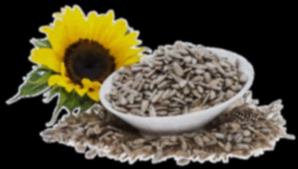natural, sugar free, seed, vegan, no sugar, healthy, nuts, fruits, healhy snacks, paleo, miachia, energy snack