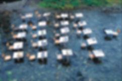 知覧水教室.jpg
