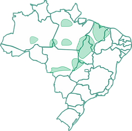 babaçu no Brasil