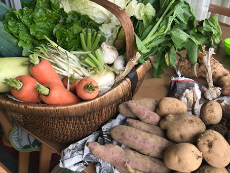 とれたて、お野菜たち