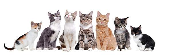 cats.jpeg