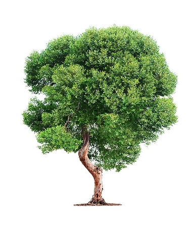 rando tree.jpg