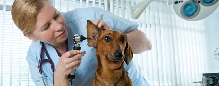 VeterinaryMedicine