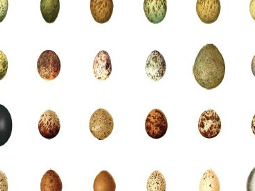 48 x DIY Miniature Eggs
