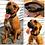 Thumbnail: Martingale Dog Collar