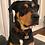 Thumbnail: Mini D Ring Martingale Dog Collar