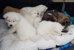 Puppies first car trip