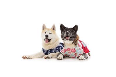 Saki and Ninja in Kimonos