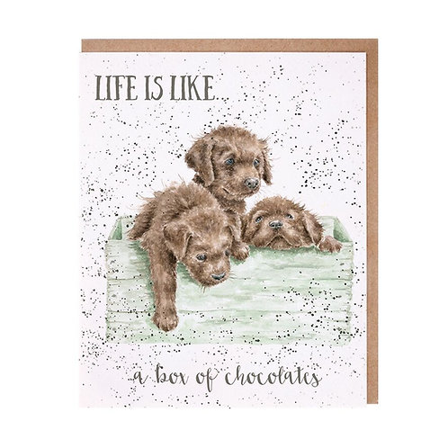 Image of Wrendale Designs 'Box of Chocolates' Puppy Dog Greetings Card