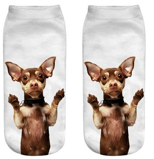Chihuahua Dog Trainer Socks