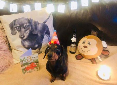 Meet Elmo the Furever Gifts Miniature Dachshund Sausage dog #furevergifts #dachshund #doxie #sausage