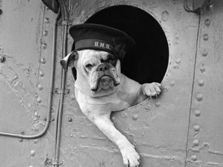 Celebrating V-E Day - Animals and Pets in World War II